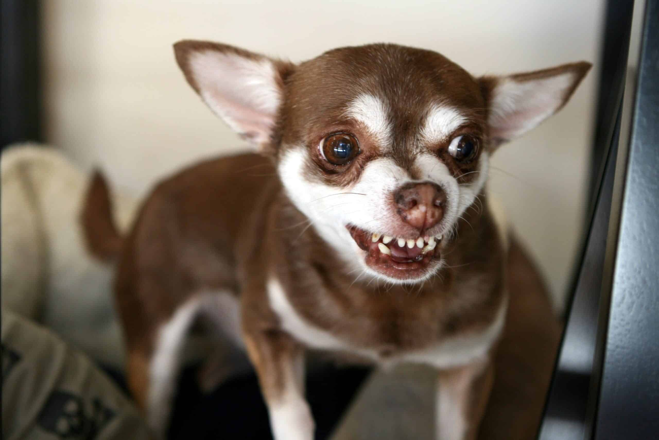 Dog Acting Strange After Teeth Cleaning