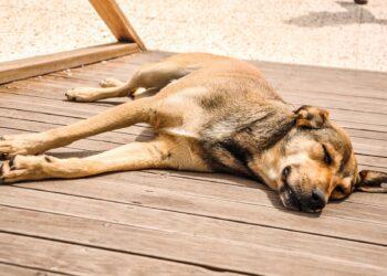 Image Source: dogpackr.com