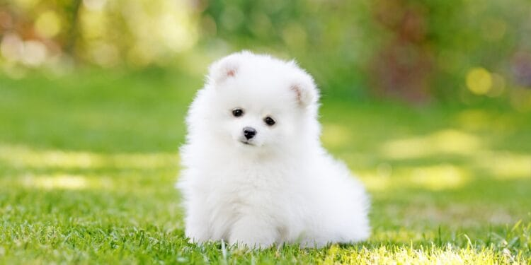 Image Source: www.thesprucepets.com
