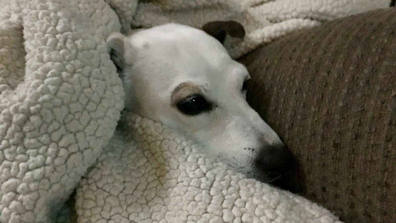 How Can I help My Dog Get Traumatized by Fireworks