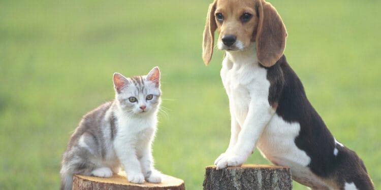 Image Source: dogs.lovetoknow.com