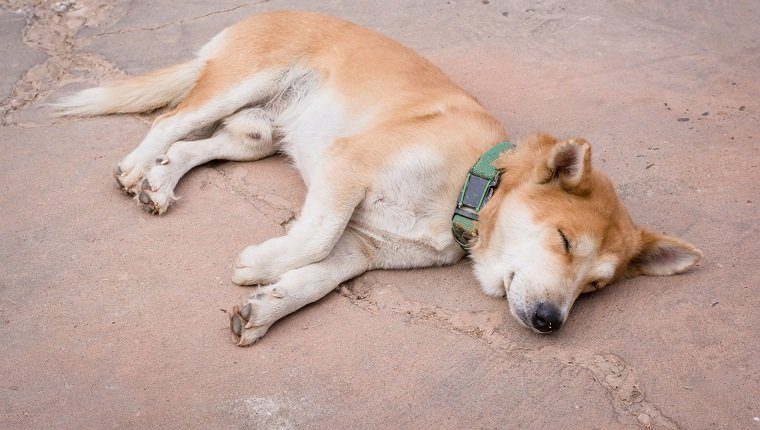 Hydroxyzine For Dogs And How You Can Use It Safely.