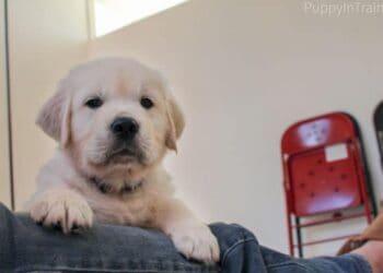 Image Source: puppyintraining.com
