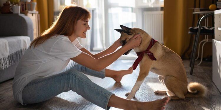 Image Source: pedigree.com