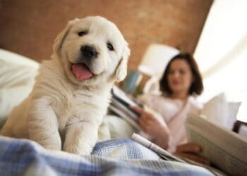 Image Source: thesprucepets.com