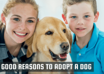 10 Good Reasons To Adopt A Dog