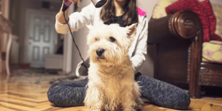dog grooming home