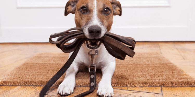 dpg leash training