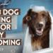 dog bathing tips