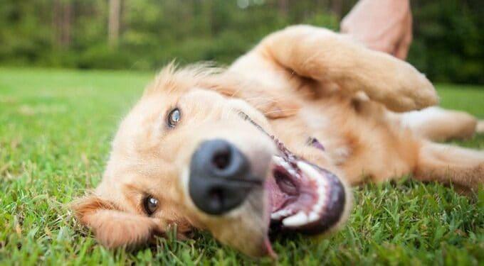 Image Source: dogtime.com