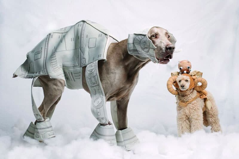 Star Wars Dog Names: Complete Guide With Best Examples