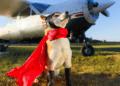 Frequent Dog Behaviors