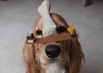 Fun Tricks to Teach Your Dog