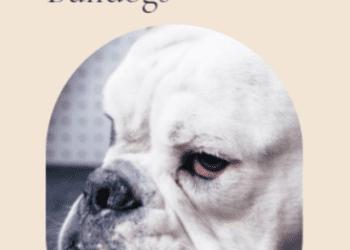 cropped-bulldog2.png