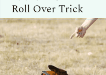 cropped-roll.png
